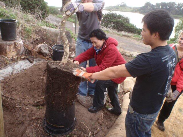 planting trees San Nic